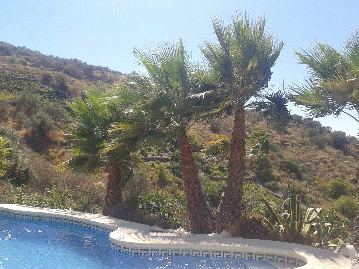 Palmbomen aan het zwembad.