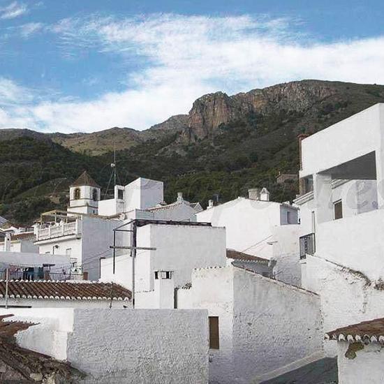 Andalusië | El Acebuchal - natuurreservaat